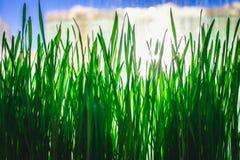 Grüner Blumenhintergrund mit Bündel Gras und schimmernden Scheinwerferlichtern Lizenzfreies Stockbild