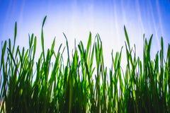 Grüner Blumenhintergrund mit Bündel Gras und schimmernden Scheinwerferlichtern Lizenzfreie Stockfotografie