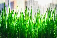 Grüner Blumenhintergrund mit Bündel Gras und schimmernden Scheinwerferlichtern Lizenzfreie Stockfotos