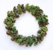 Grüner Blumenkranzrahmen auf weißem Hintergrund Dekoration der flachen Lage, der Draufsicht, des Herbstes oder des Winters Stockfotografie