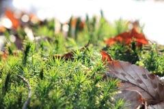 Grüner Boden im Wald Lizenzfreie Stockfotografie