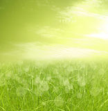 Grüner bokeh Auszugshintergrund Stockbild