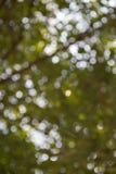 Grüner Bokeh-Baum-Hintergrund Lizenzfreies Stockbild