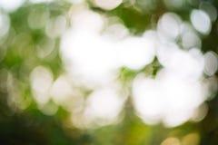 Grüner bokeh Hintergrund lizenzfreie stockfotografie