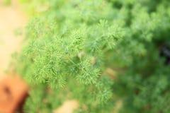 Grüner botanischer Farn Stockfotografie