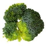 Grüner Brokkoli lokalisiert auf weißer Draufsichtvektorillustration Stockfotografie