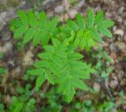 Grüner Busch, der allein im Wald wächst Lizenzfreie Stockbilder
