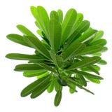 Grüner Busch des Kreises Stockfoto