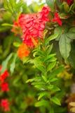 Grüner Busch mit roten Blumen stockbilder