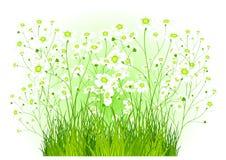 Grüner Busch mit weißen Blumen vektor abbildung