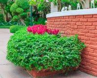 Grüner Busch um die Wand des roten Backsteins im Garten Stockbilder