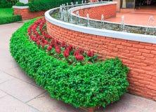 Grüner Busch und rotes cockcomb um die Wand des Brunnens Lizenzfreies Stockfoto