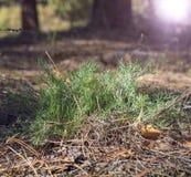 Grüner Buschwermut unter dem Steppenwald lizenzfreies stockbild