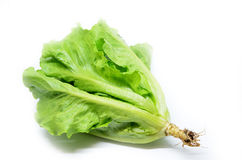 Grüner chinesischer Kopfsalat Stockfotografie