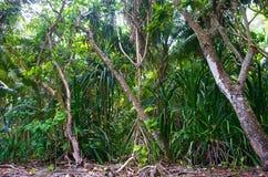 Grüner dichter tropischer Wald stockfoto