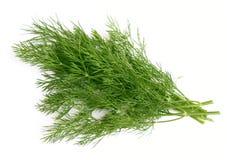 Grüner Dill Stockbilder