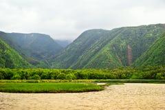 Grüner Dschungel von Hawaii Lizenzfreie Stockfotos