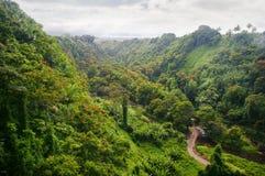 Grüner Dschungel von Hawaii Stockbilder