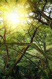 Grüner Dschungelwald mit Strahl der Leuchte. Stockfoto