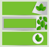 Grüner eco Fahnensatz mit Blättern Lizenzfreies Stockfoto