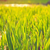 Grüner Eco-Hintergrund Stockbilder