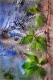 Grüner Efeu über altem Glas mit Flecke Stockfoto