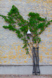 Grüner Efeu in Form von Bäumen dehnt entlang eine Backsteinmauer, Straßenlaterne aus Stockfotos