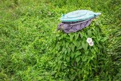 Grüner Efeu völlig eingewickelt im Behälter Naturgewinne über alles stockbild
