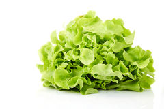 Grüner Eichenblattkopfsalat Lizenzfreies Stockbild