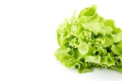 Grüner Eichenblattkopfsalat Lizenzfreie Stockfotos