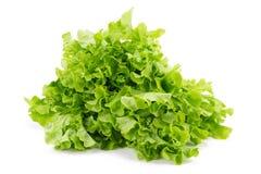 Grüner Eichenblattkopfsalat auf weißem Hintergrund Stockfotos