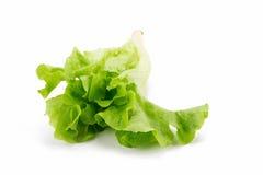 Grüner Eichenblattkopfsalat lokalisiert auf weißem Hintergrund Stockbild