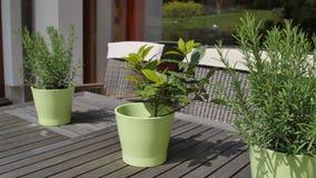 Grüner Eimer drei mit Blumen auf Schweinskopfsülzenholztisch auf Fensterhintergrund im Garten stock footage