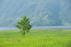 Grüner einsamer Baum Lizenzfreie Stockfotos