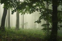 Grüner Fantasiewald mit Nebel Stockfotos
