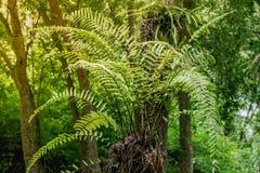 Grüner Farn auf Baum Stockfoto