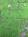 Grüner Farn auf dem Gehweg Lizenzfreies Stockfoto