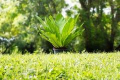 Grüner Farn auf Gras im tropischen Natursommerhintergrund, Ökologie lizenzfreies stockbild