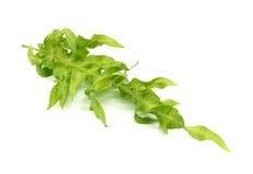 Grüner Farn auf Weiß Stockfotografie