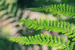 Grüner Farn verlässt im Detail Stockfotos