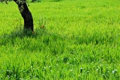 Grüner Feld- und Baumstamm Stockbilder