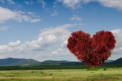 Grüner Feld- und Herzbaum Stockfotos