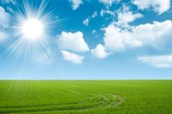 Grüner Feld- und Sommerhimmel Lizenzfreies Stockbild