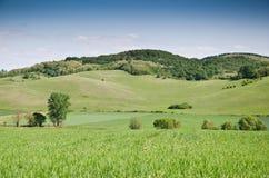 Grüner Feldhintergrund Lizenzfreie Stockfotografie
