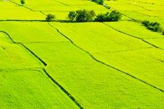 Grüner Feldhintergrund Lizenzfreies Stockfoto