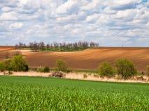 Grüner Feldhintergrund Stockfoto
