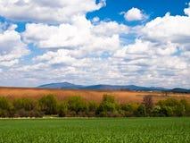 Grüner Feldhintergrund Lizenzfreies Stockbild