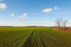 Grüner Feldhintergrund der Winterkorngetreide Lizenzfreie Stockbilder