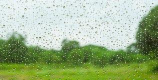 Grüner Feldhintergrund im Hinterhof am regnerischen Tag, Ansicht aus dem Fenster heraus Stockfotografie