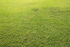 Grüner Feldhintergrund oder -tapete Sonniger Tag am Fußballplatz Lizenzfreies Stockfoto